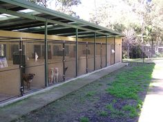 Dog Boarding Kennel Designs - Bing Images