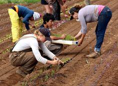 Scholarships available for UC Santa Cruz organic farming apprenticeships