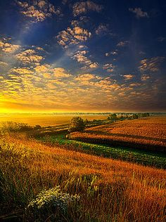 Absence of Words by Phil Koch