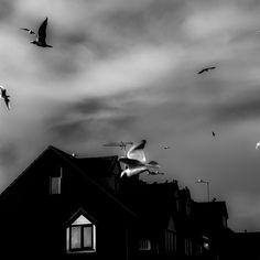 Invasion of the bird snatchers