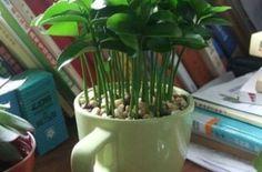 Cómo plantar las semillas de tu limón y así aromatizar delicioso tu casa (FOTOS) | Ecoosfera