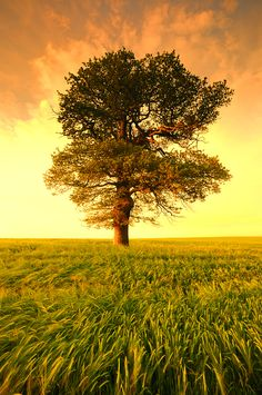 An oak growing from a plant to a great tree, and then lopped, is still the same oak; and a colt grown up to a horse; sometimes fat, sometimes lean, is all the white the same horse; a mass of matter a living body, identity is not applied to the same thing. by john locke