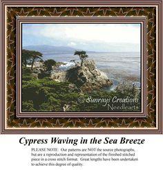 Cypress Waving in the Sea Breeze, AL-105 - Sunrays Creations