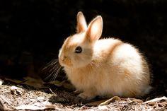 sun-kissed bunny
