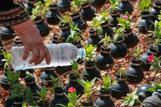 Garden with deactivated grenades to ask for peace in Palestine