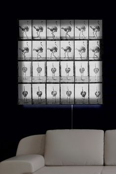 Oliver Gal Gallery Ostrich in Motion LED Lightbox