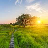 Kiefer - Das keltische Baumhoroskop 19.02.-28.02. 24.08.-02.09. Die Kiefer ist als ansehnlicher, immergrüner Nadelbaum die Königin der Wälder in vielen Teilen der nördlichen Hemisphäre