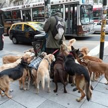 extreme-dog-walking-in-buenos-aires-argentina