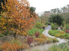DiPrisco Meadow Garden    Location: Lafayette, California  2011 APLD International Landscape Designer of the Year and Gold Award Winner: Suzanne Arca & Suzanne Arca Design