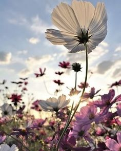 Wildflowers are the perfect combination of beauty and strength. Not only do they add vibrant color wherever they grow as well they require very little maintenance. #photosnotpasswords