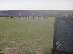 Hitchin Lavender Fields, UK Yoga