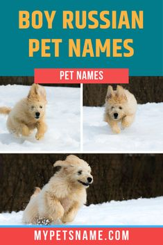 If you're looking for boy Russian pet names, why not name him 'Malchik', which literally means boy in Russian, and is thus an easy and good choice for any male pet. Inspired? Check out others in the list.  #russianpetnames #boyrussianpetnames #petnamesinrussian Male Pet Names, Pet Names For Dogs, Boy Cat Names, Russian Boys, Big Country, Boy Dog, Inspired, Pets, Check