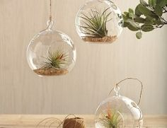 Glass garden globes. No room for plants? Hang them from the ceiling!
