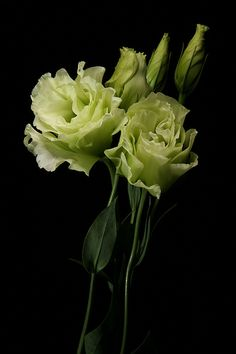 A single stem of green lisianthus will be placed in wine bottles for the cocktail tables—simple and fun.