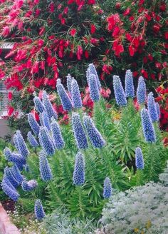 Plantings include Sedum Blue Pearl, Cotyledon macrantha and Crassula Campfire Crazy Paving, Drought Tolerant Garden, Blue Pearl, Garden Inspiration, Perennials, Nativity, Exotic, Gardens, Fire