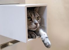 New from Japan: Necobaco Cat Tree #TreePlan - Top 10 at - Stylendesigns.com!