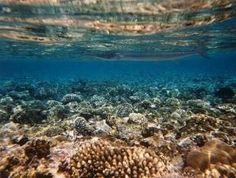 Sharm el Sheikh underwater world
