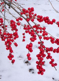 white & red ~