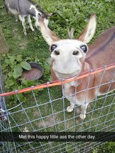 Funny Pictures Of The Day - 49 Pics-->aww look at him! He's so cute! Such an adorable little donkey Cute Funny Animals, Funny Animal Pictures, Funny Cute, Hilarious, Funny Memes, Cat Memes, Funniest Animals, Funniest Memes, Funny Happy