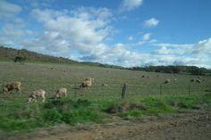 Barossa Valley, South Australia, Australia