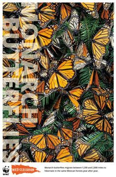 Through the activities within the monarch butterfly toolkit, students will learn how everyday food choices can impact this incredible species, their habitat, and their legendary migration. Wwf Poster, South Of The Border, Learning Environments, Learning Tools, Monarch Butterfly, Natural World, Habitats, Wildlife, Classroom