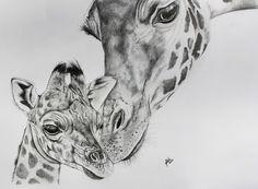 drawing giraffes | Giraffe Face Drawing Giraffe pencil drawing.