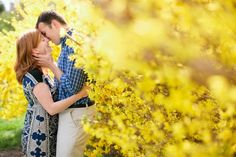 forsythia kiss @Jodi Miller Photography
