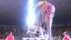 Circus Elephants Rush To Help Friend Who Fell During Cruel Stunt