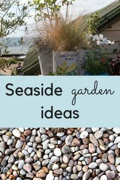 Urban Garden How to create a delightful seaside garden - Lots of easy seaside garden ideas, seaside garden themes, the best beach garden plants and tips for seaside garden design.