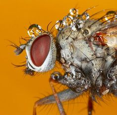 These are marvelous photos of insects covered in morning dew.....