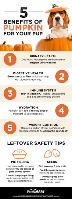 5 health benefits of pumpkin for your pup: Pumpkin is not just for humans, but has numerous benefits for your pets too!