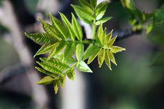 Endlich Frühling Plant Leaves, Plants, Flora, Plant, Planting