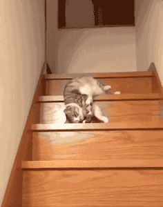 Other Funny Gifs   And Funny Youtube Video -