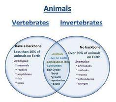 25+ best ideas about Vertebrates