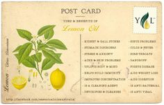 Essential Oil Spotlight : Lemon © Graphics are property of Aromatherapy For Australia. Please do not use images without permission. Holistic Care, Holistic Healing, Healing Oils, Healing Herbs, Orange Essential Oil, Doterra Essential Oils, Young Living Oils, Young Living Essential Oils, Lemon Uses