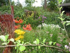 Lomapirttiä ympäröi kaunis puutarha