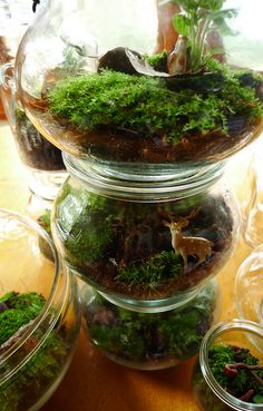 Leaning tower of terrariums