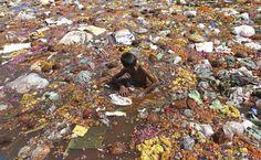 Gathering coconuts to offer to Ganesh, Sabarmati river, Ahmedabad, India.