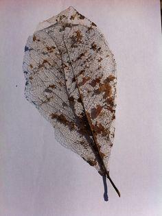 Fragiel herfstblad