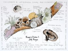 Middlewood Journal: Lichen and Jelly Fungus