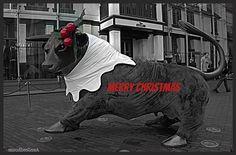 https://flic.kr/p/PYsp8L | MERRY CHRISTYMAS FROM BIRMINGHAM UK