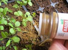 Outstanding Grow Like A Pro With These Organic Gardening Tips Ideas. All Time Best Grow Like A Pro With These Organic Gardening Tips Ideas. Organic Gardening, Gardening Tips, Vegetable Gardening, Gardening Shoes, Balcony Gardening, Organic Soil, Veggie Gardens, Organic Plants, Eating Organic
