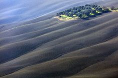 Olive trees in the middle of nowhere Photo by Renato R. — National Geographic Your Shot