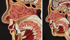 O corpo humano feito de papel
