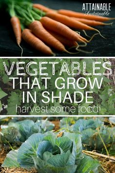 Stuck with a shady garden space? Opting for vegetables that grow in the shade will increase your garden success.Plant these partial shade vegetables that will survive - and thrive! - in low light situations. You CAN grow a productive food crop in a shade garden. #veggiegarden #garden #homestead via @Attainable Sustainable