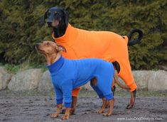 Check Our Ohio Fleece Dog Suit designed by Euro Dog Designs. Travelers Rest, Dog Suit, Winter Suit, Snow Dogs, Body Warmer, Dog Wear, Leather Collar, Edd, Dog Design
