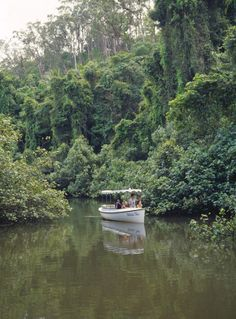 Daintree River and rain forest, Far North, Australia photo