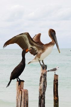 Photo of the Day:Birds of Holbox Photo by:Karla Utting (Miami Beach, FL); Holbox, Mexico.