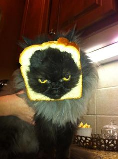 the subtle art of Cat Breading