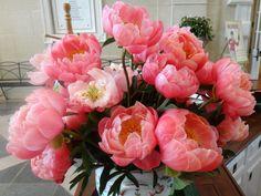 Pfingstrosen Großansicht Rosa Farbe Coral Charm Blumen